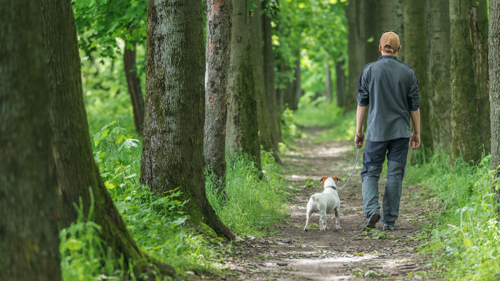 Nature Walk Could Lead to Better Mental Health, Researchers Say